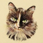 pastel of cat with many colors