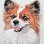 portrait of a Pomeranian dog in pastel from client photo