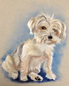 Shih Tzu seated dog portrait