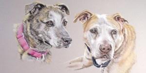 pastel portrait of two pit bulls