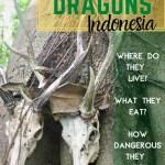 komodo-dragons-indonesia-pinterest