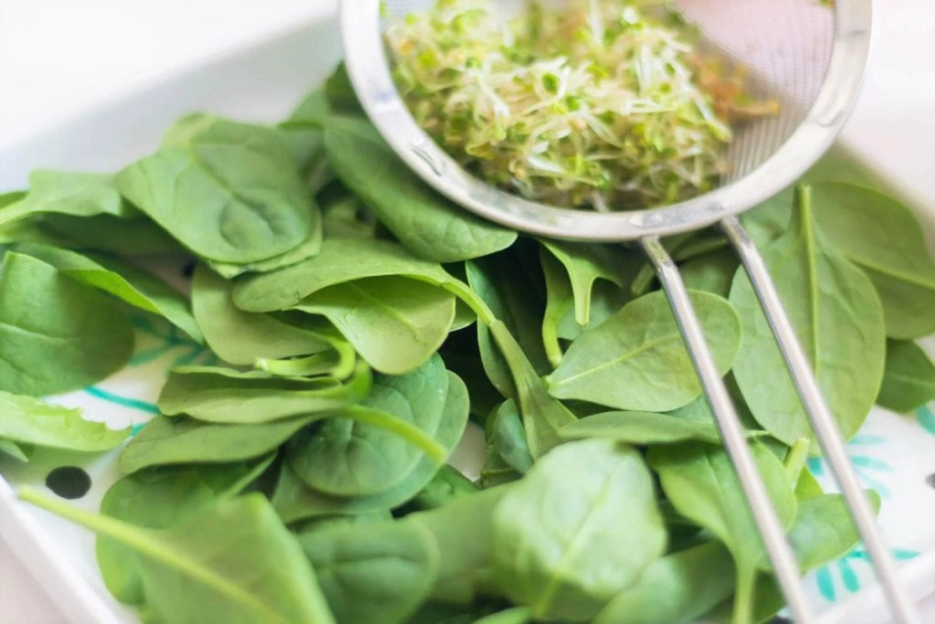 Pumpkin - Spinach Salad - ingredients - spinach and sprouts