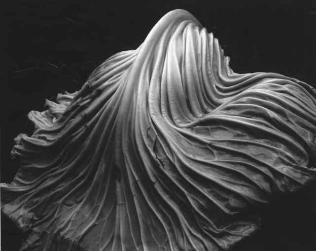 Image result for imogen cunningham