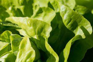 salata w wielkiej brytanii