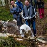 Wraz z Esra przeciwstawić szwedzkich lasach