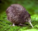 Show them that kiwi's can fly!