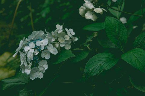 Natur 12