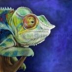 Kameleon_2012