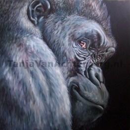 gorilla80x80