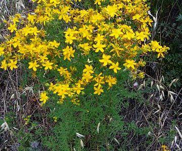 Il solstizio d'estate e le erbe di san Giovanni