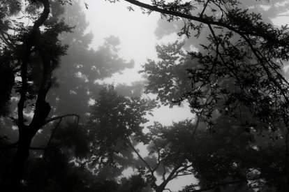 Branches sur fond de brume