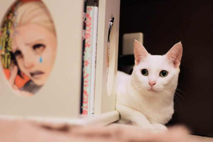 cat-cafe-nyankoto-4