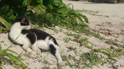 les-chats-de-kondoi-beach-4