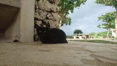 les-chats-de-kondoi-beach-5