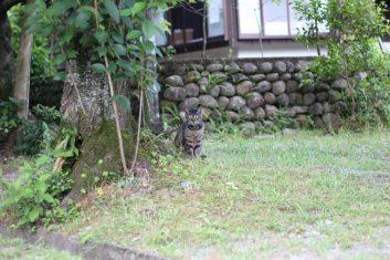 Yakushima 14 juillet (4)