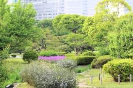 Hamarikiyu Gardens Tokyo (17)