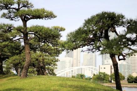Hamarikiyu Gardens Tokyo (7)
