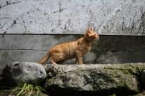 Kurokawa Onsen Cats 21 juillet 2017 (7)