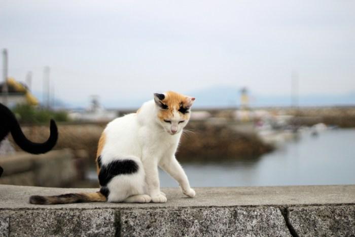 Excursion sur Manabe Shima, comme dans le livre