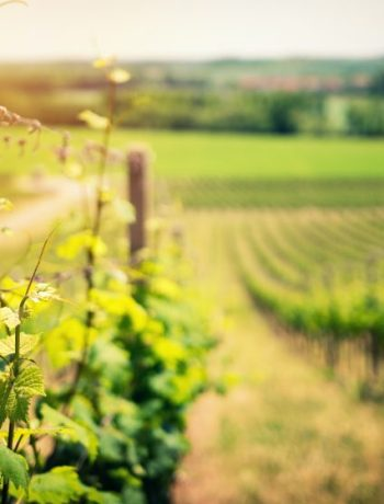Franschoek Vineyards