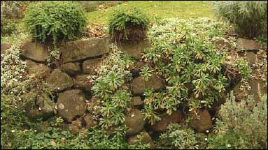 Dry Stone Wall Softened by Planting