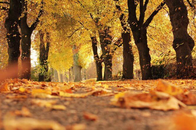 Vier dingen die ik leuk vind aan de herfst