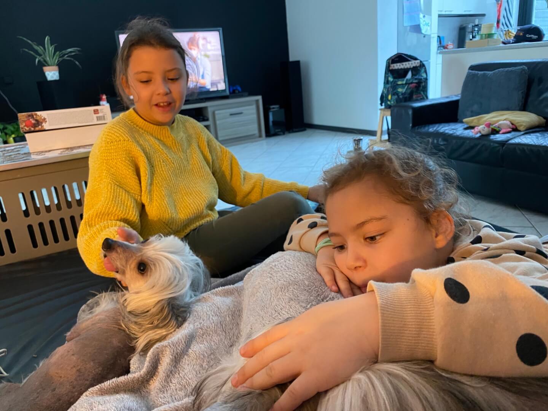 knuffelen met de hondjes