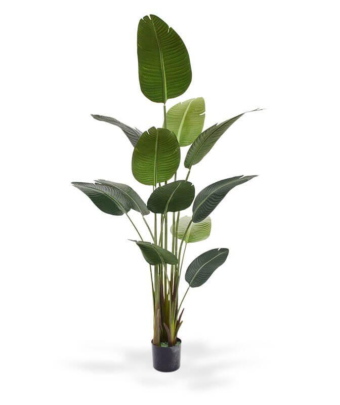 kunstbomen strelitzia nicolia
