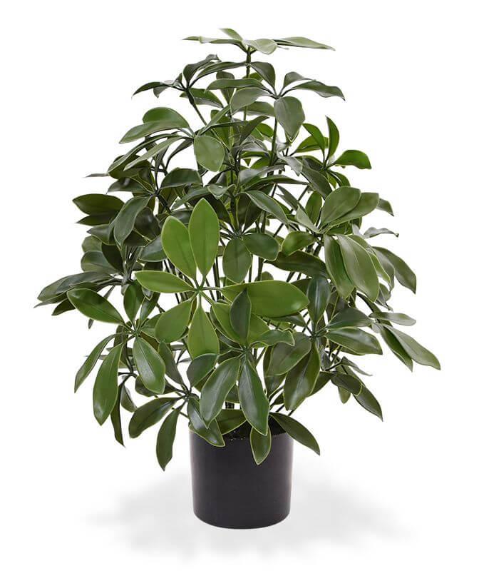kunstplanten Schefflera