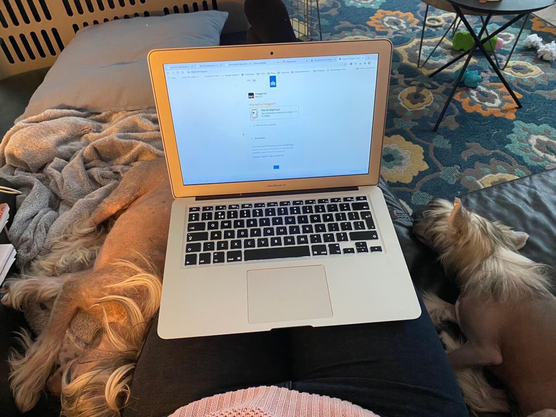 werken met de hondjes