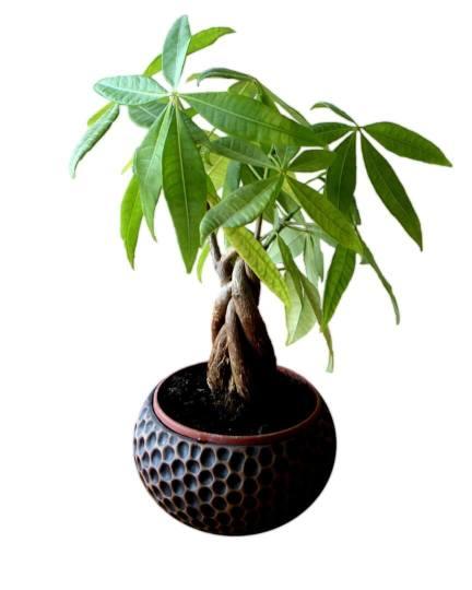 Yucca is één van de planten die tegen een stootje kunnen