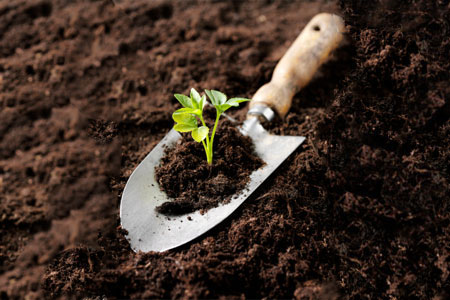 Growing team garden analogy