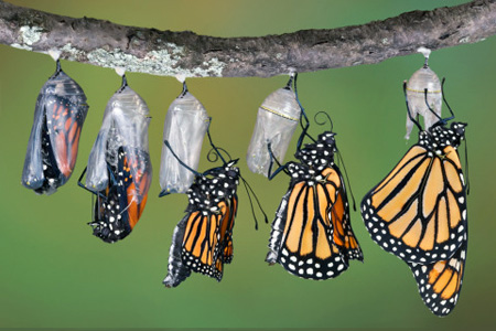 Leadership  and personal transformation
