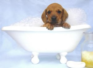 Pic courtesy - http://caninedesignsnj.com/