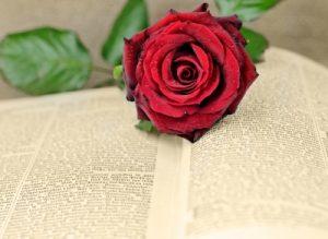 """""""Romantic Novel"""" by dan"""