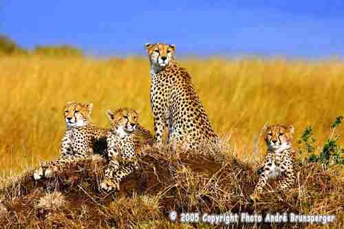 Serengeti safari en tanzanie
