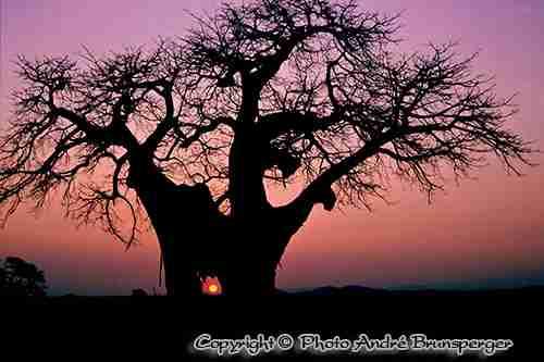 Ruaha Safari en tanzanie