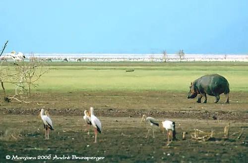 Lac Manyara, safari mixte grande migration plus Zanzibar