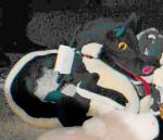 Osco puppet dragon