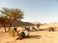 Heilung auf dem Sinai