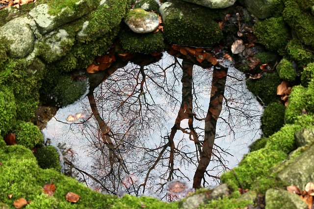 Bachblüten stellen sich vor – Heute: Rock Water