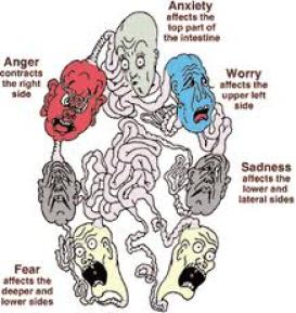 organs_emotions