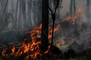 incendios em portugal