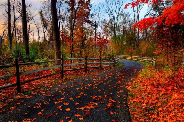 Znalezione obrazy dla zapytania czerwone liście jesień
