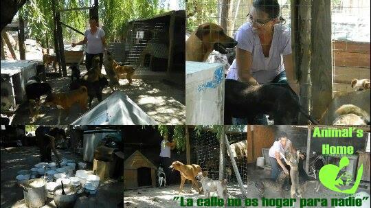 Animal's Home