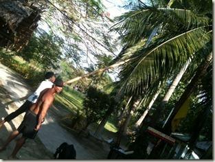 Cocosnötskörd