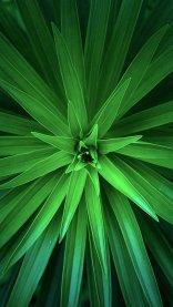 Green HD Flower Wallpaper for iPhone 7