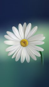 White HD Flower Wallpapers for iPhone 7