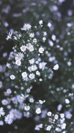 Many White HD Flower Wallpapers for iPhone 7
