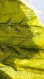 Green Closeup HD Flower Wallpaper for iPhone 7